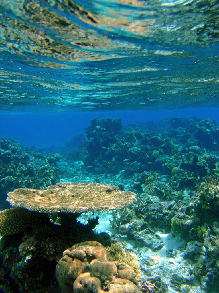 Plongée dans les coraux des Fidji